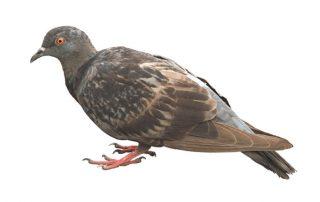 Plaga de Aves