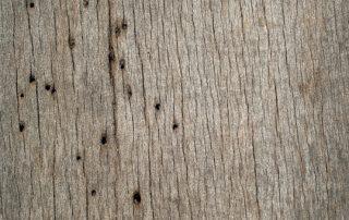 Carcoma de la madera