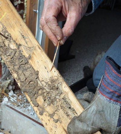 Tratamientos de la madera en Irabia Plagas