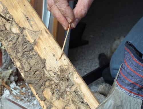 Te contamos cómo eliminar la carcoma en la madera