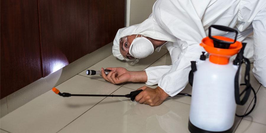 Servicio de Desinsectación - Irabia Control de Plagas