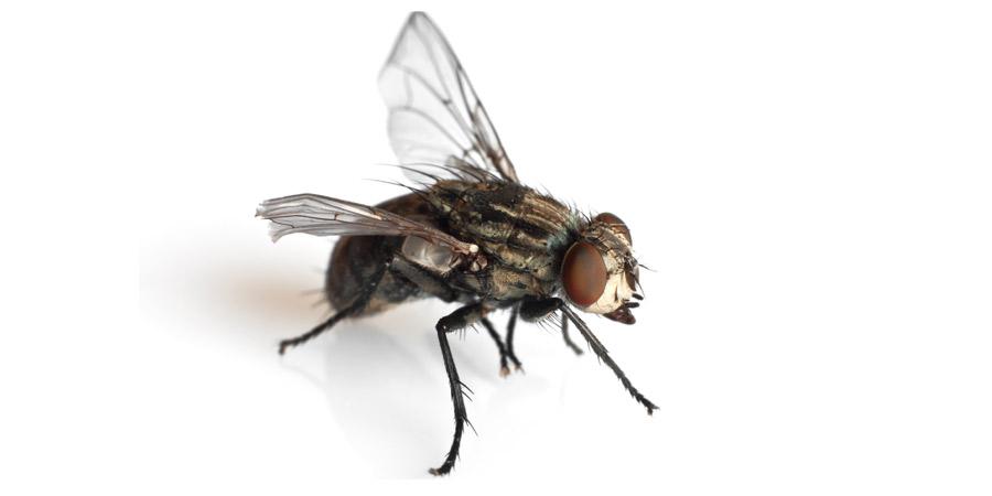 Plaga de Moscas -Irabia Control Plagas