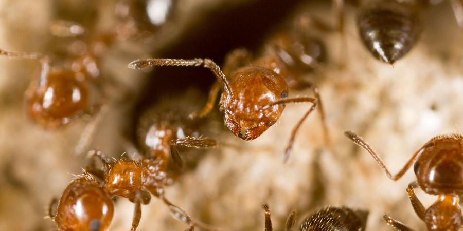 Insectos de productos almacenados