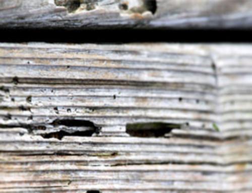 Tratamiento anticarcoma: elimina las plagas de raíz