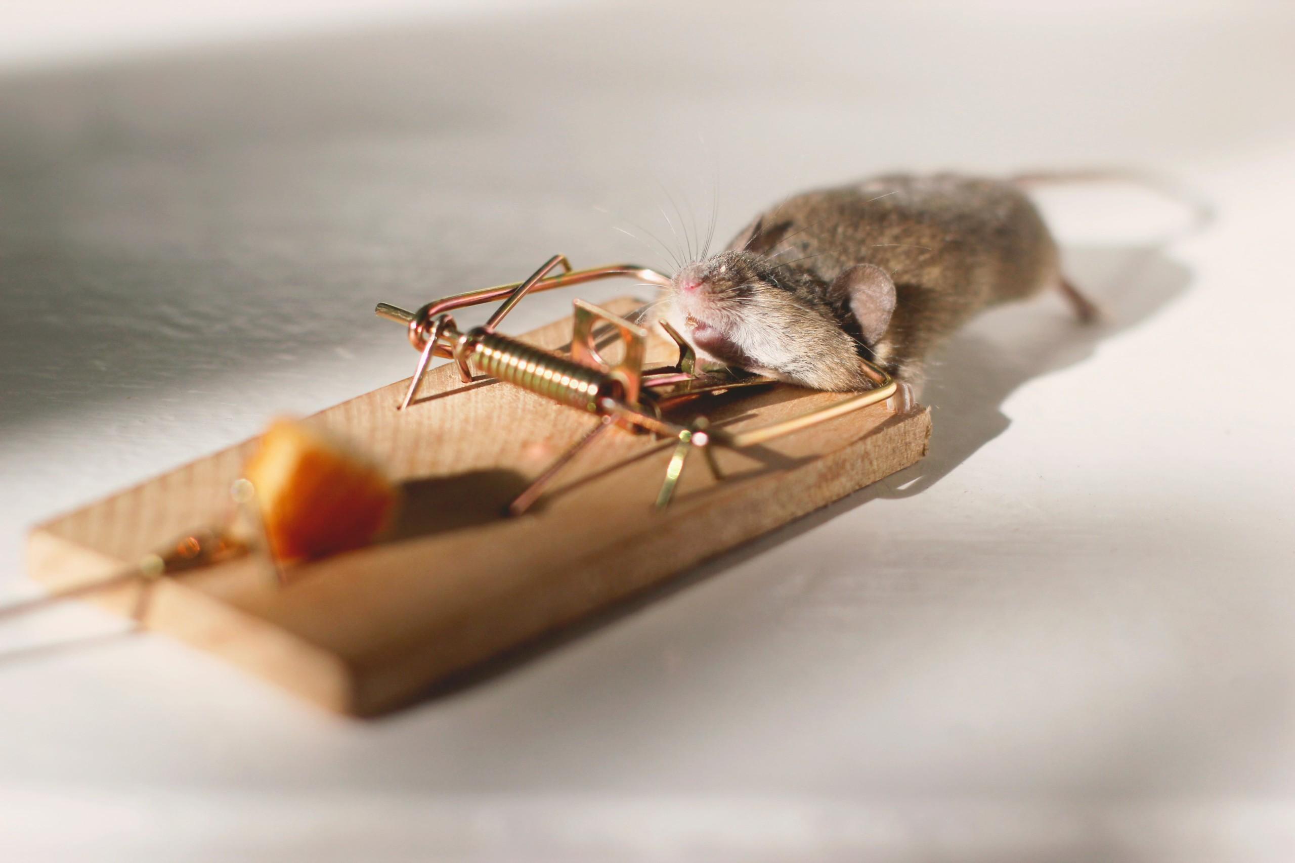 cómo eliminar ratones