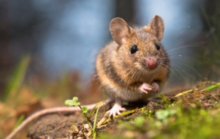 cómo eliminar ratones en casa