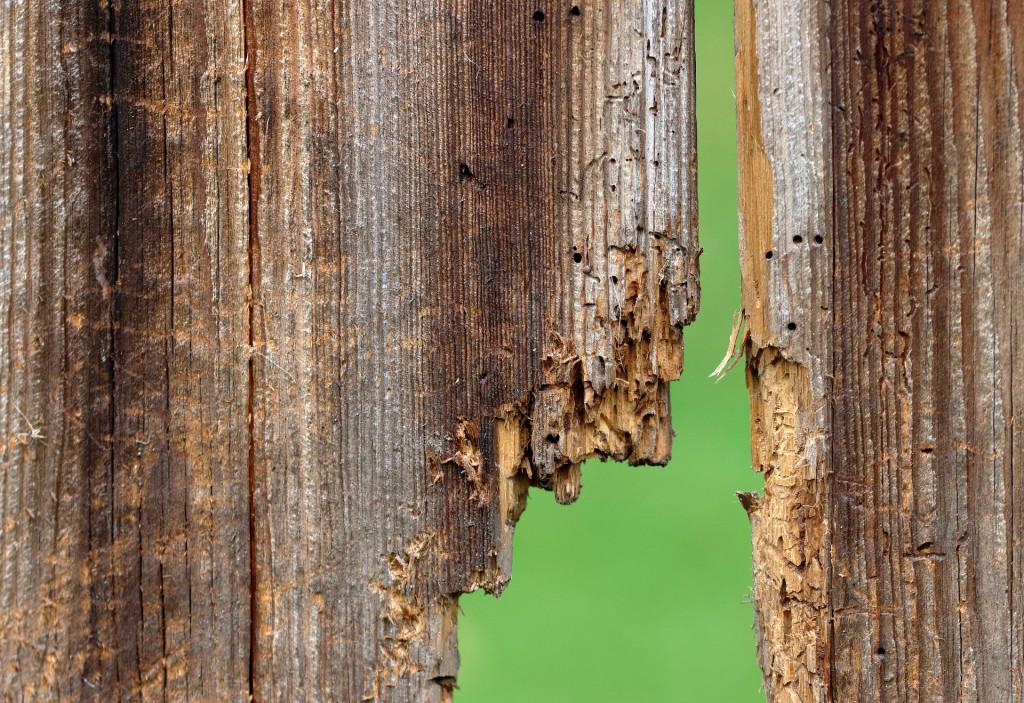 Tratamientos preventivos para termitas y carcoma