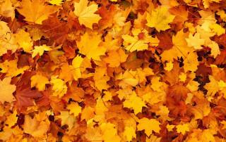 Plagas más comunes del otoño en hogar y negocios